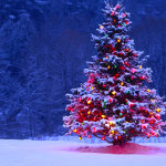 Dolphin for Holidays: 5 Android Apps For Christmas Wallpapers
